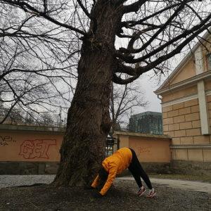 Noora Happonen: Ihminen ja puu